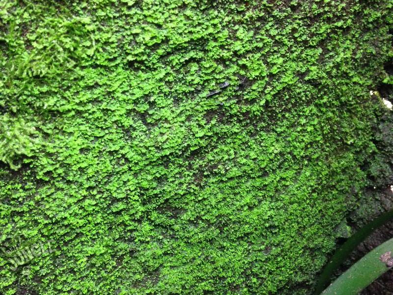 3 Liter Ben 180 S Rainforest Background Composition 21 90