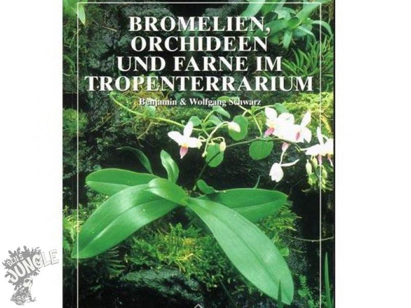 bromelien orchideen und farne im tropenterrarium 24 80. Black Bedroom Furniture Sets. Home Design Ideas