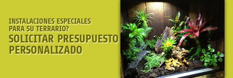 En busca de plantas especiales para terrario?